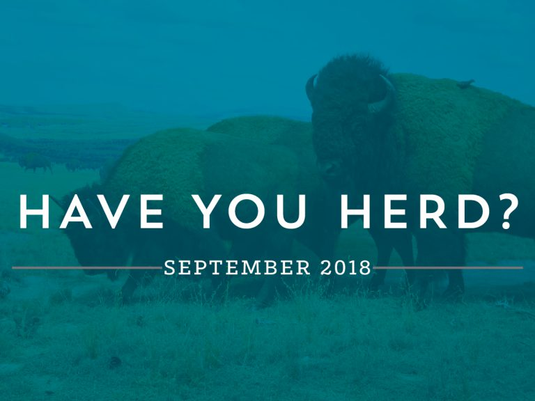 Have You Herd? - September| Buffalo.Agency
