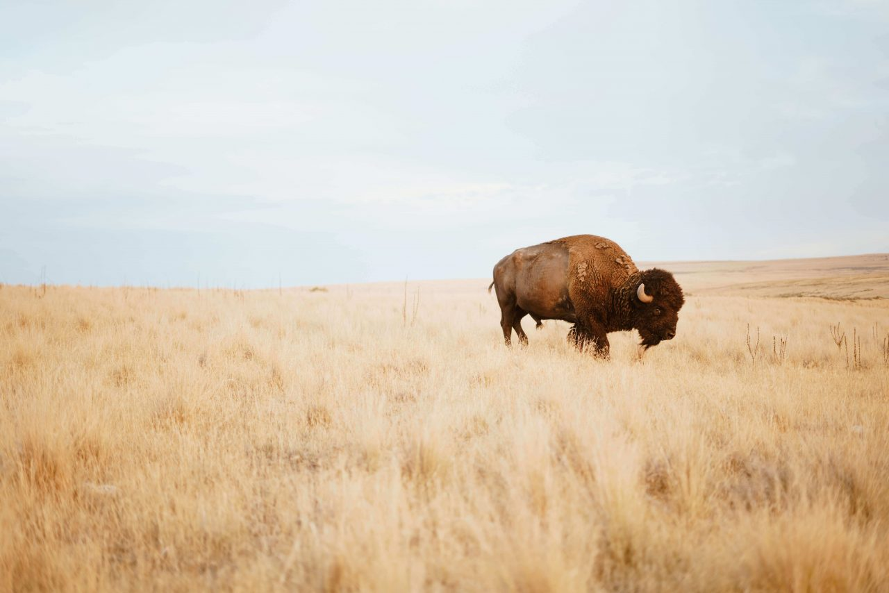 Super Charge | Have You Herd | Buffalo.Agency