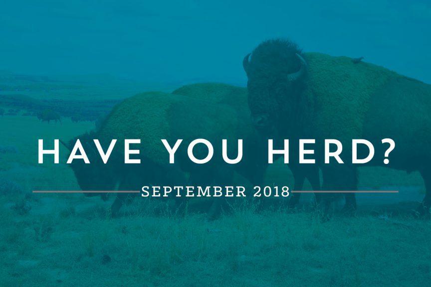 Have You Herd? - September| Buffalo.Agency