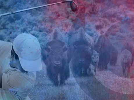 Have You Herd | Buffalo Agency