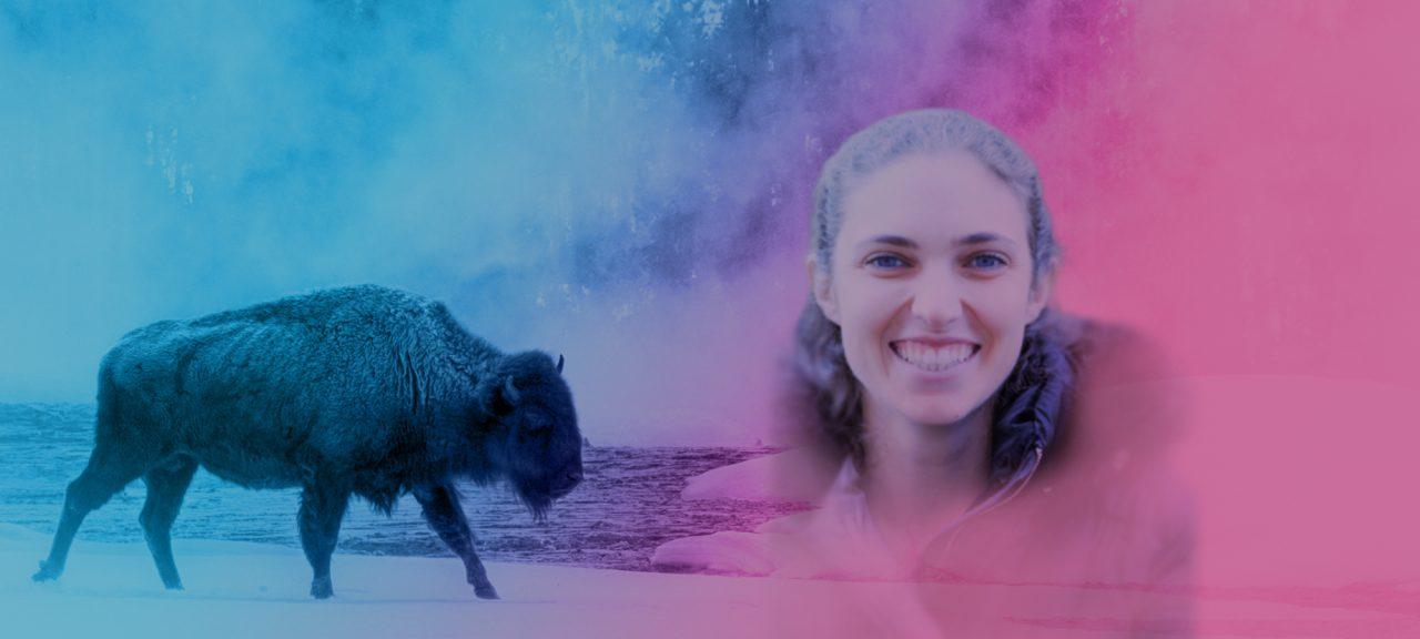 Herd Highlight   Buffalo Agency   Associate Kelly Okun