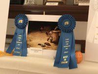 Buffalo Agency | Herd Highlight | Lindsay